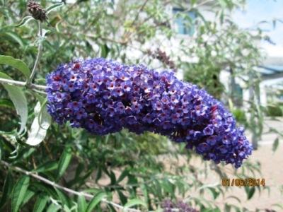 esterno_fiore